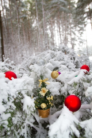 occurs: in winter forest on Christmas tale occurs