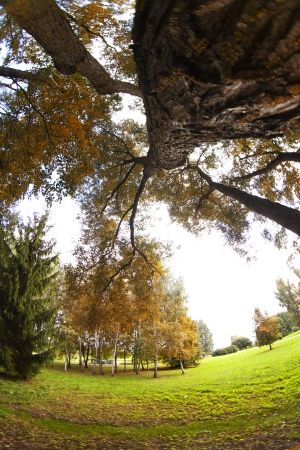 Autumn park fisheye