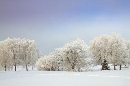 Winters Tale Stock Photo