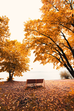 autumn park landscape photo