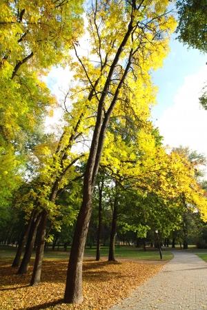 Bike Path in the autumn park