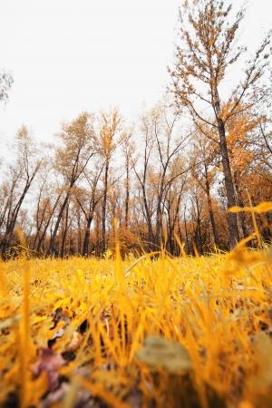 wooded path: rainy autumn