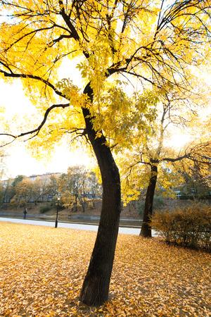 Radweg in der Herbst-Park