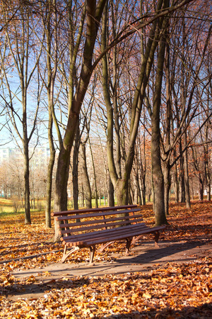 bench in the autumn park photo