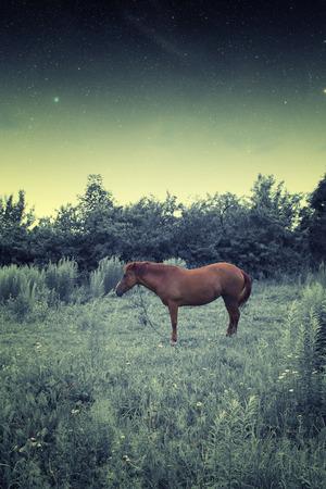 horse at night.  photo