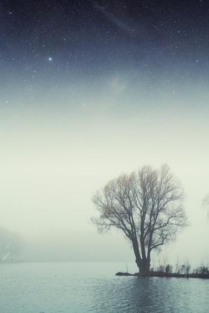 Nacht See Wald. Lizenzfreie Bilder