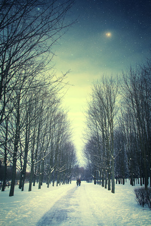 winter night with friends in the park photo