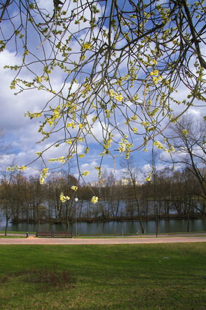 willow blossoms on a background of the river and the city photo