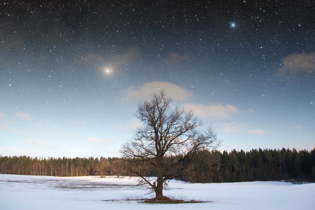 winter night in the park. Elements of this image furnished by NASA