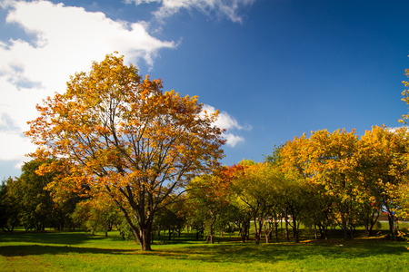 autumn in the park. gold-covered trees