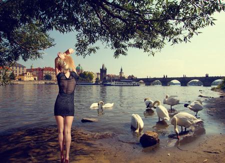 Swan in Prague. birds swimming in the river near the Charles Bridge. photo