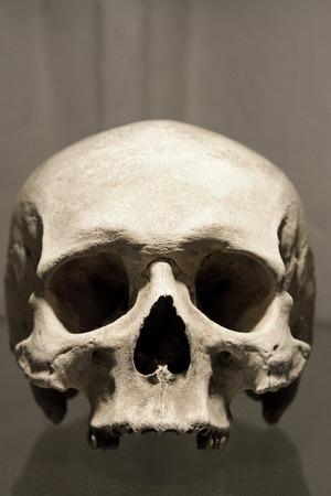 古い骨、クトナー ・ ホラのゴシック様式のヴォールトの頭蓋骨。納骨堂。 写真素材