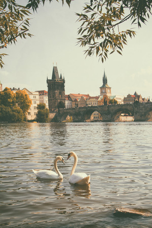 vintage retro style. Swan in Prague. birds swimming in the river near the Charles Bridge. photo