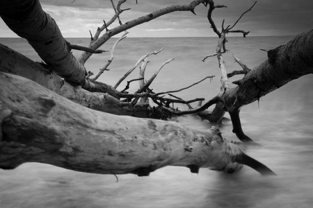 Black & White rocky seascape scene with seagull on stone, Фото со стока