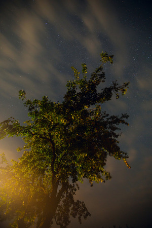 timelapse: night in the village. stars shine in the sky above the trees