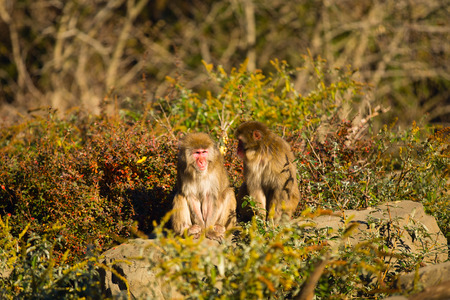 combed: two monkeys combed each others backs while sitting in the park Stock Photo