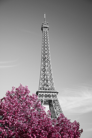 tower: View of Eiffel tower in monochrome style with selective colorization