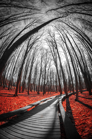 road in the red forest. Mystical landscape. three colors black white red