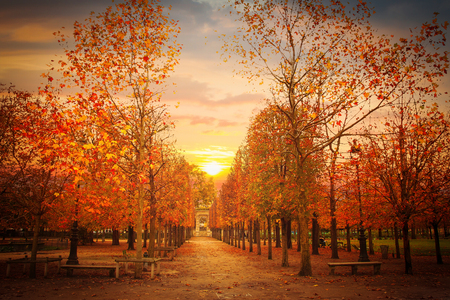 Garden of Tuileries. (Jardin des Tuileries) . Paris. France