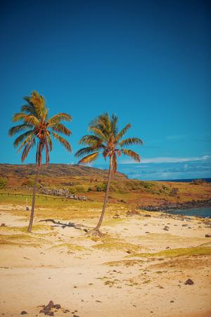 rapa nui: Anakena, una playa de arena blanca de coral situada en el extremo norte de Rapa Nui (Isla de Pascua).