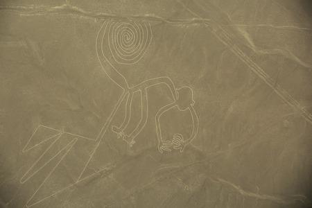 ナスカの地上、空中ビュー, ペルー, 猿