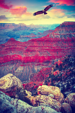 Grand Canyon National Park seen from Desert View. eagle flies in the sky. Stock Photo