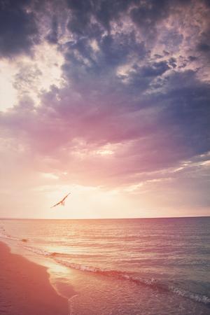 Bird in the sunset over the sea flies away
