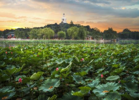 베이 하이 공원은 베이징의 자금성 북서쪽에있는 황실 정원입니다. 스톡 콘텐츠