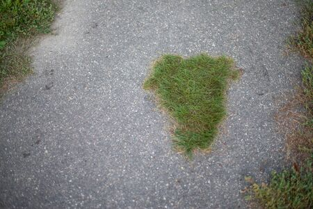 grass grows through asphalt in the city