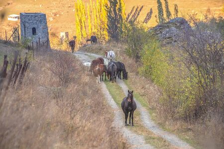 horses walk in the mountains in the Caucasus