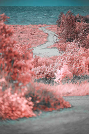Infrared photo.view of the shore of the Baltic Sea. Standard-Bild