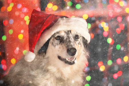 Border collie Australian shepherd mix dog wearing red santa hat with bokeh Christmas lights outside in the magical snow at night looking happy welcoming warm ready friendly celebratory