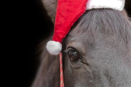 Makro Nahaufnahme von einem schwarzen Pferd Kopf mit Weihnachtsmütze und roten Halfter isoliert auf schwarzem Hintergrund Weihnachtsferien Wintersaison zu feiern Lizenzfreie Bilder