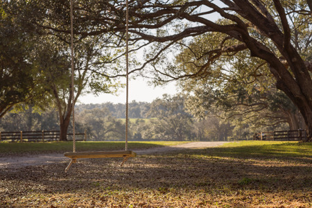 Empty rustic wooden swing hanging by rope on large live oak tree branch in the countryside at a farm or ranch