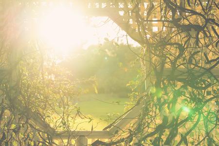 Climber Weinpflanze Stängel verflechten sich mit weißen Korbgitter mit einem Öffnungsfenster und Sonnenstrahlen Sonne Flare in einem Garten anzeigt Hoffnung Geburt zukünftiges Glück Lebens Göttlichkeit