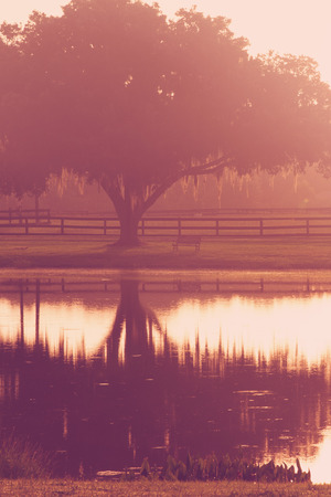transcendence: Silhouette of a lone tree and bench by lake pond water with reflection early at sunrise or sunset with   a retro vintage filter to feel inpsirational rural peaceful medatative relaxing