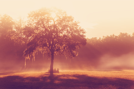 transcendence: Silhouette of a lone tree in a field early at sunrise or sunset with sun beams mist and fog with a retro vintage filter to feel inpsirational rural peaceful medatative