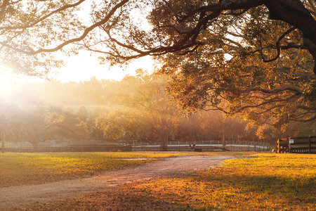 dirt: Countryside farm or ranch with dirt road and overhanging live oak branches and distant fields at sunrise or sunset and sun rays beaming across