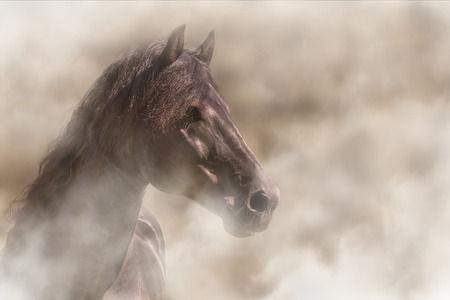 Beautiful alert Frisian black brown horse in fog mist smoke looking curious worried free majestic regal mythological 스톡 콘텐츠