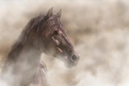 Beautiful alert Frisian black brown horse in fog mist smoke looking curious worried free majestic regal mythological Stockfoto