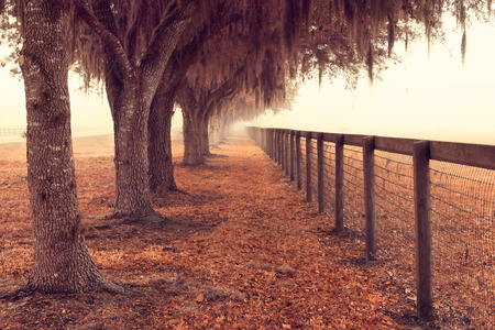 moss: Tree lined fence next to a pasture field meadow open space in the rural country with spanish moss hanging down on a foggy misty morning looking peaceful serene relaxing solitary meditative Stock Photo