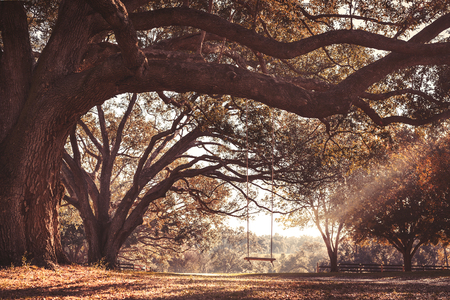 dirt road recreation: Empty rustic wooden swing hanging by rope on large live oak tree branch in the autumn fall countryside at a farm or ranch looking serene peaceful calm relaxing beautiful southern Stock Photo