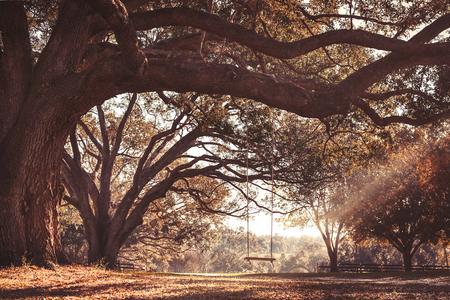 Vaciar columpio colgante de madera rústica con una cuerda en la rama de árbol de roble grande en el campo caída del otoño en una granja o rancho que mira sereno cálido y tranquilo relajante hermosa sur Foto de archivo