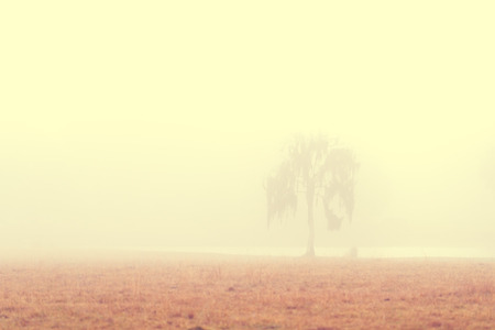dismal: Lonely solitary tree in an open grassy field meadow pasture in the fog looking empty dismal depressing desolate bleak stark grim dramatic moody drab dim dull