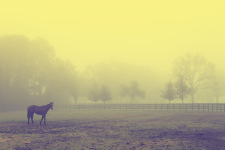 old vintage: Lonely solitary horse equine in an open grassy field meadow pasture in the fog looking empty dismal depressing desolate bleak stark grim dramatic moody drab dim dull Stock Photo