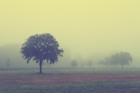 dismal: Lonely solitary tree in an open grassy field meadow pasture in the fog looking empty dismal depressing desolate bleak stark grim dramatic moody drab dim dull with retro vintage filter