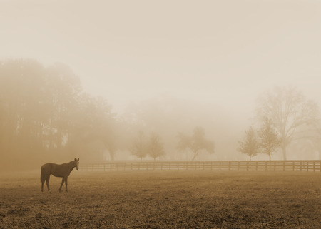 drab: Lonely solitary horse equine in an open grassy field meadow pasture in the fog looking empty dismal depressing desolate bleak stark grim dramatic moody drab dim dull Stock Photo