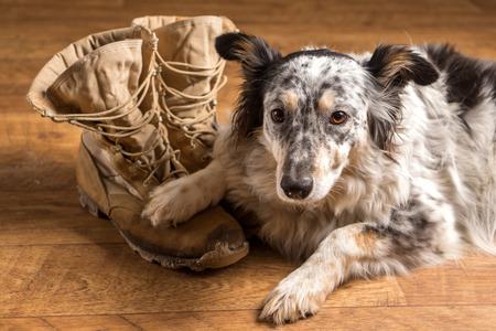 Border collie Australische herdershond hond huisdier liggend op tan veteraan militaire bestrijding van het werk bouw laarzen op zoek triest rouwende in rouw depressief alleen verlaten emotionele nabestaanden bezorgd gevoel heartbreak Stockfoto