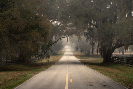 traveled: Straight empty lonely country road street less traveled in Florida and trees with Spanish moss overhanging on a cloudy foggy day looking grim sad isolated moody