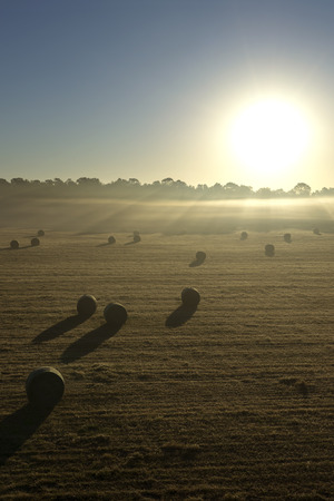 myst: Hay rolls in a field meadow at sunrise sunset with sunbeams and fog on a farm ranch in the rural countryside
